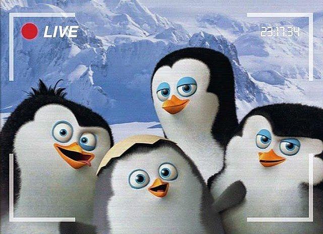 Ковальски пингвин из Мадагаскара